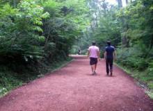 사려니숲길